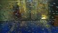 500 Neonsalmler Zierfischangebot